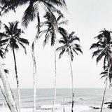 Photoblock | Palmbomen & zee_