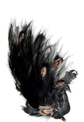 Pauw Veren Zwart/Bruin