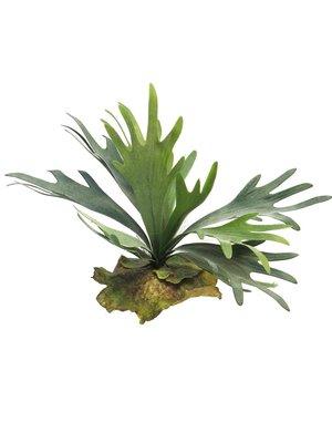 kunstplant Platycerium 27cm