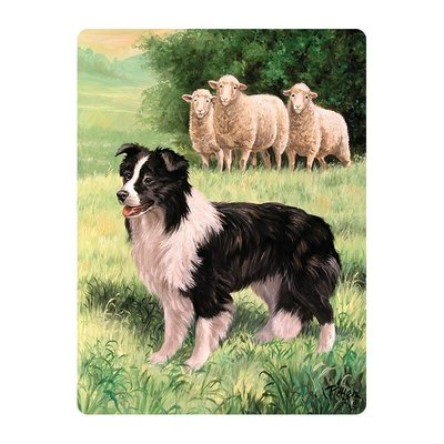 Kaart 3D | Border Collie