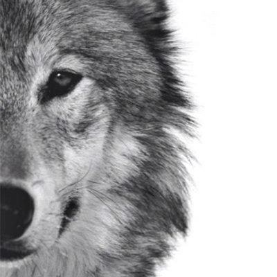 Photoblock | Wolf