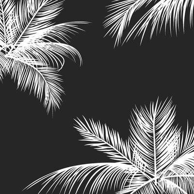 Photoblock | Palmbomen zwart-wit