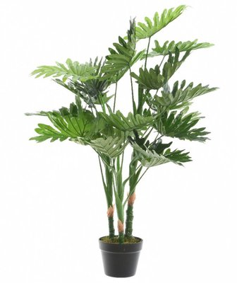 Plant Groen kunst philodendron