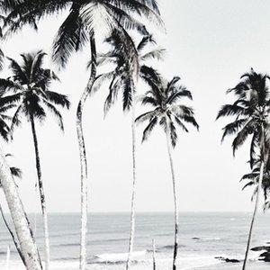 Photoblock | Palmbomen & zee