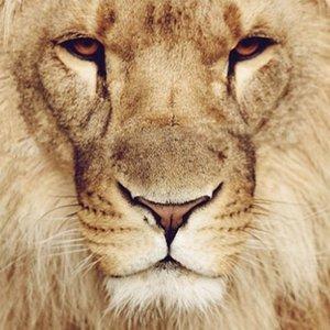 Photoblock | Lion