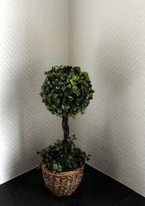 Buxus decoratie