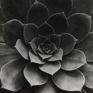 Photoblock | GREY PLANT
